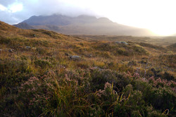 Skye heather