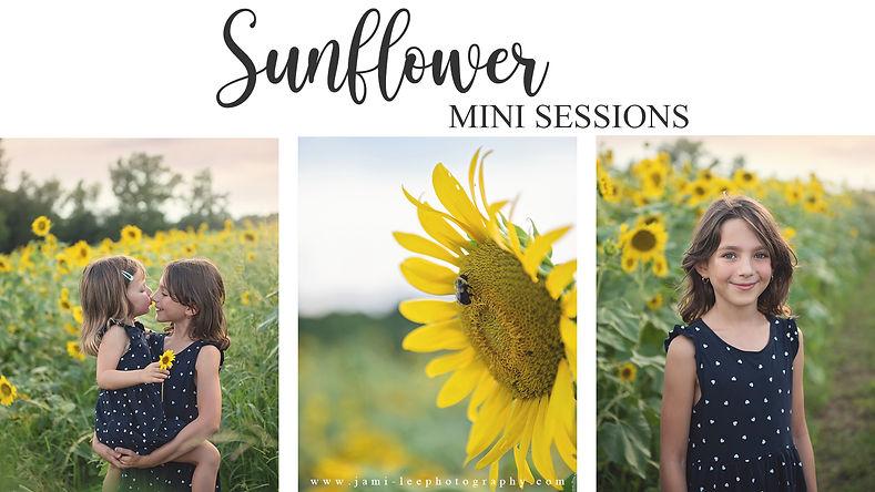 SunflowerMinis.jpg