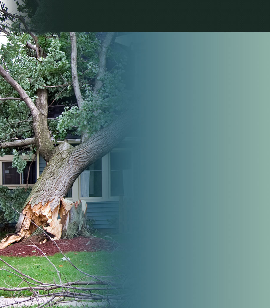Storm-Damaged-Tree.jpg