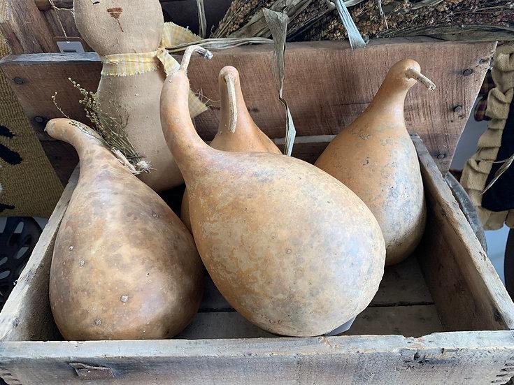 Medium Sized Gourd