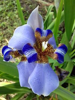 Flores para site (4)