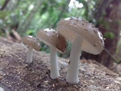 Fungos (12)