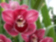 cymborchids.jpg