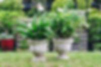 www.nicolereed.photography