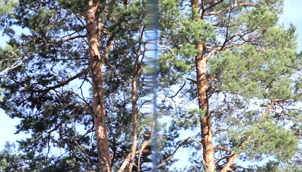 EWTwin trees_SP.jpg