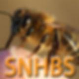 Scotth Native Honey Bees Society SNHBS logo