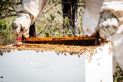 Knobel Honey Hive