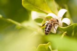 Bee 98-1