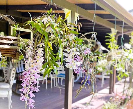 Honohono Orchid Baskets