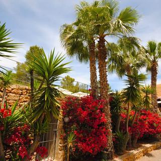 Yoga Retreats Ibiza Benirras