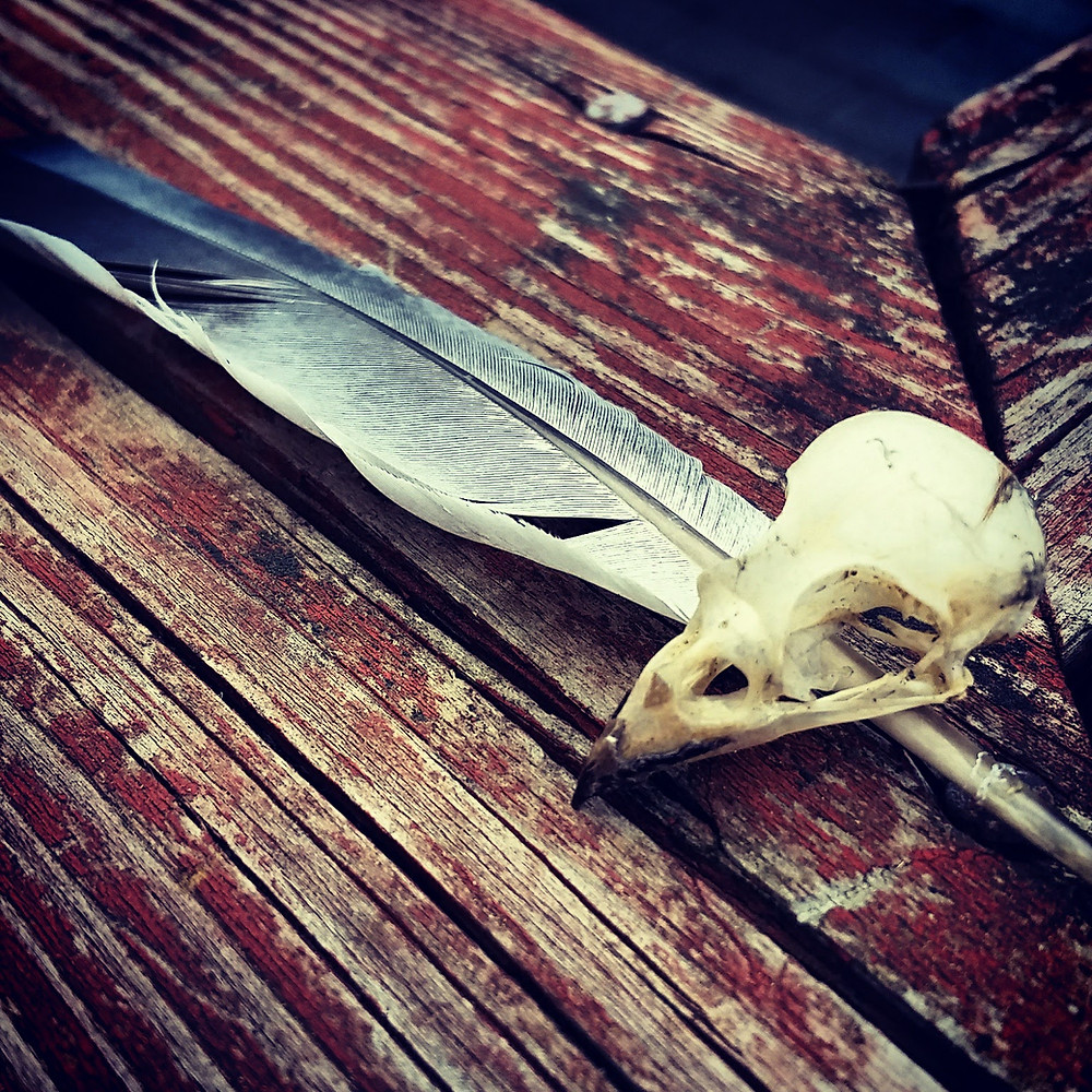 baby bird of prey skull resting on top of a feather on weathered wood once painted red.