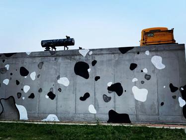 2020 - Kool Cows