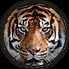 W0C_logo-wix.png