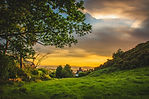 green-trees-under-blue-and-orange-sky-du