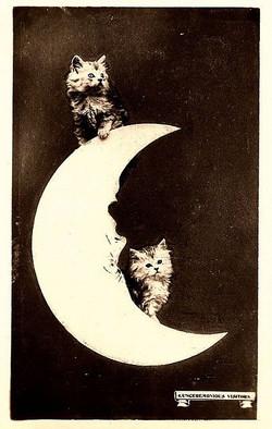 moon kittens.