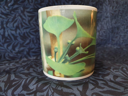 Ginkgo biloba Mug - Female Flowers
