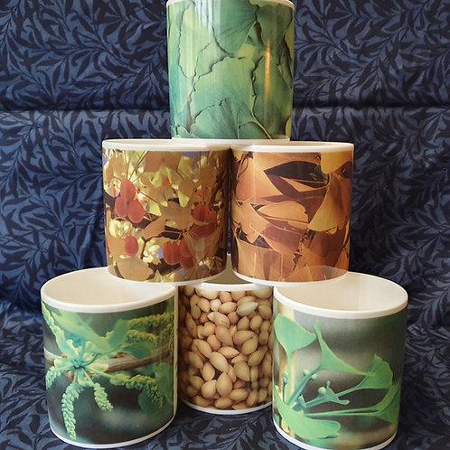 Ginkgo biloba Mug - Collection