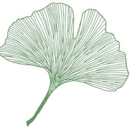 Ginkgo biloba 'Rolled Foliage'