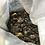 Thumbnail: 10 Ginkgo biloba seeds