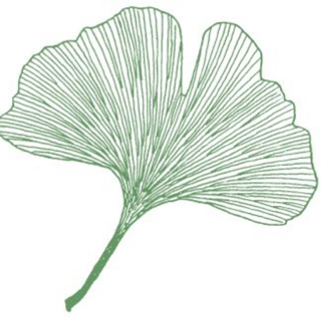 Ginkgo biloba 'Tony Mahalic Selection' syn. 'Mahalic's Selection'