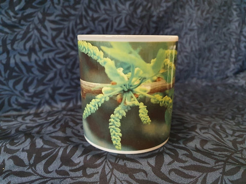 Ginkgo biloba Mug - Male flowers