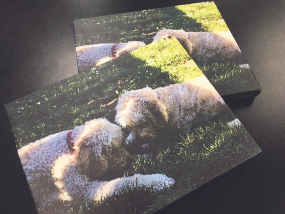 canvasdogs.jpg