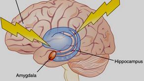 How Chronic Stress can Shrink the Brain