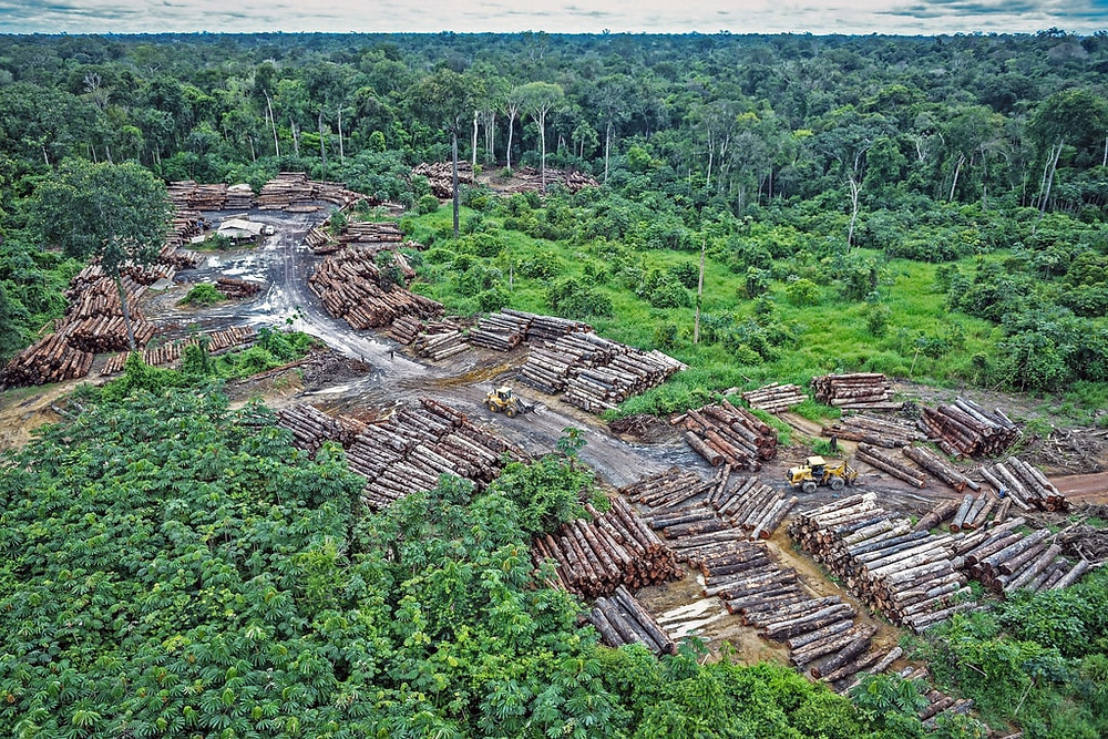 Link between deforestation and Covid-19