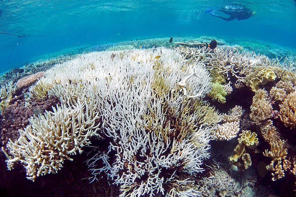 Coral bleaching and the impact of climate change on marine life