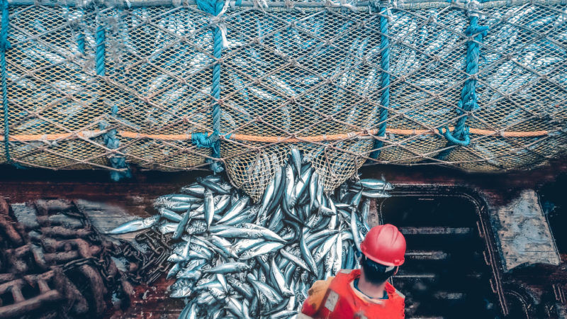 The impact of overfishing on the environment