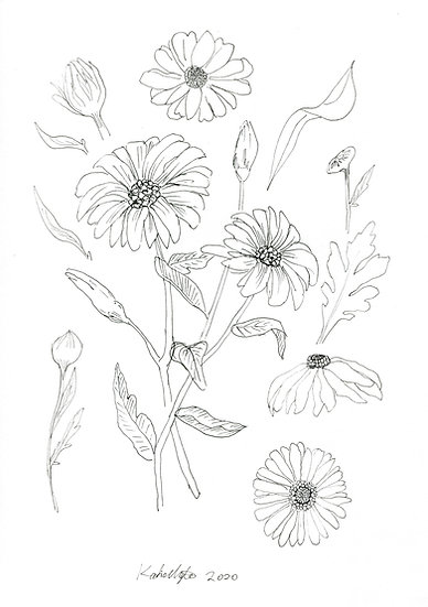 Flower Study #3