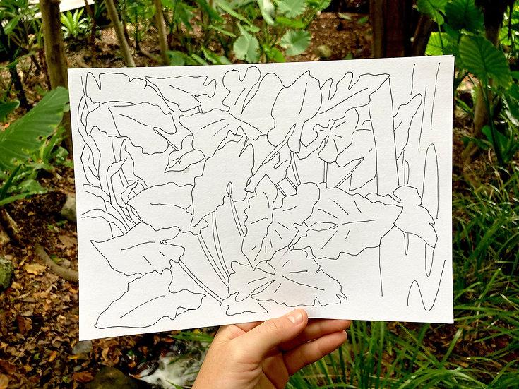 Plant Study #1