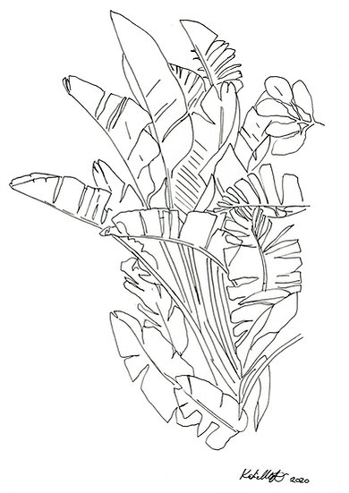Plant Study #2