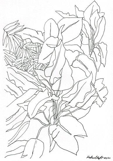 Plant Study #4