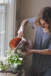 Bewässerung von Zimmerpflanzen