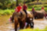 Thaiföldi idegenvezetés ChiangMai Elefántolás