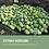 Thumbnail: IOF-Studie zur Olivenölqualität im Schweizer Detailhandel 2019