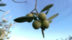 evoo.expert Olivenöl.jpg