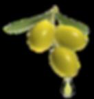 Olivenöl mittelfruchtig