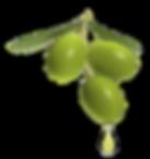 Olivenöl_intensivfruchtig.png