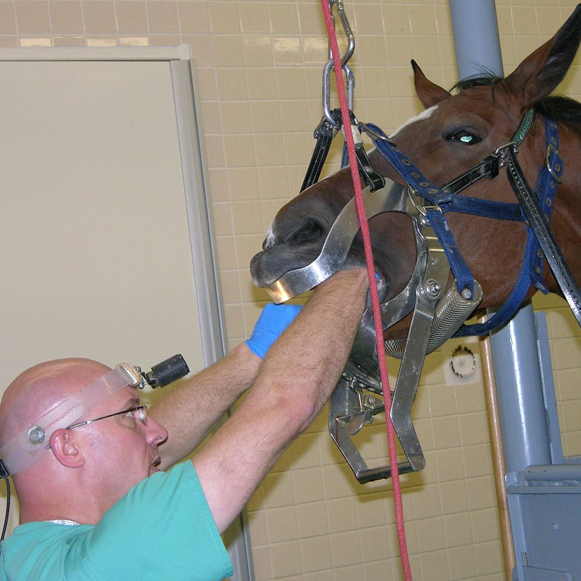 Clinical Rounds/Journal Clubs (Equine Dentistry and Oral Surgery AM)
