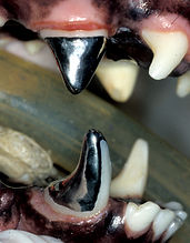 Restorative dentistry and prosthodontics