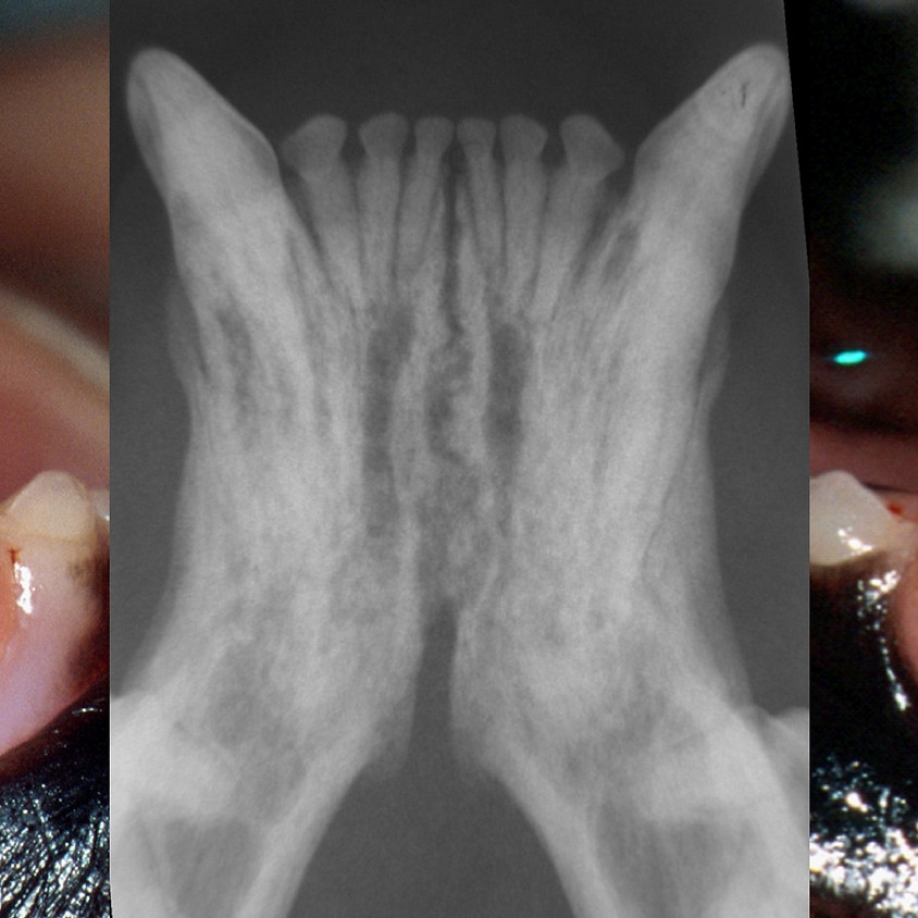 Clinical Rounds/Journal Clubs (Tooth Resorption AM)