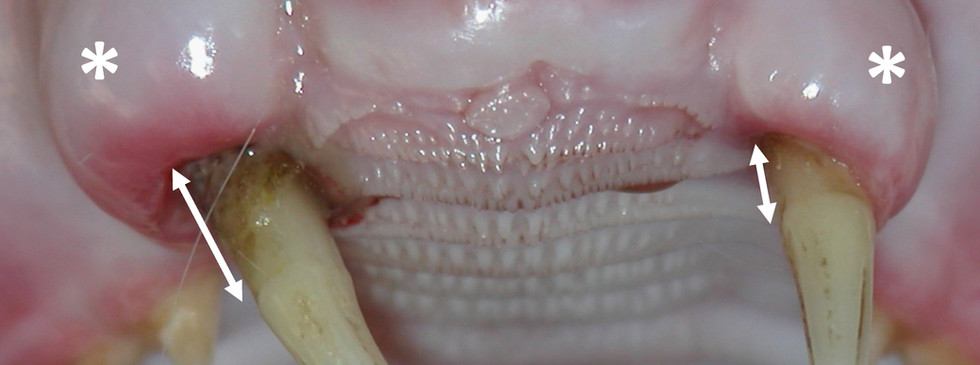 Luxation and tooth extrusion