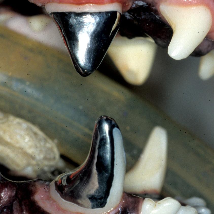 Procedure Discussion (Restorative Dentistry/Prosthodontics/Orthodontics)