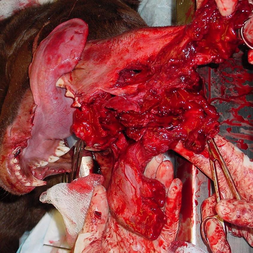 Triaging Dental and Oral Emergencies