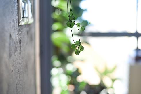 Detail _Plant.jpg