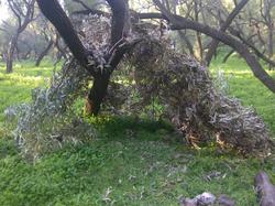 בית בטבע - עבודה בטבע תרפיה