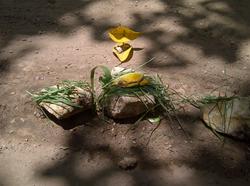 ביטוי מחומרי הטבע בטבע תרפיה