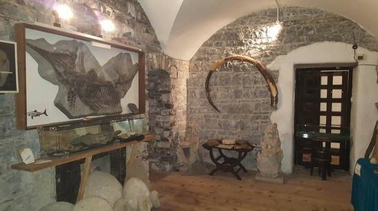 fossil-room.jpg